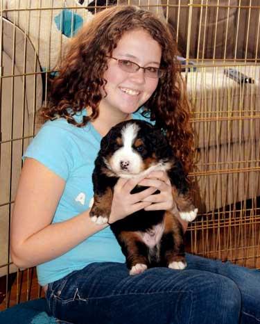 Berner pup, 6 weeks old