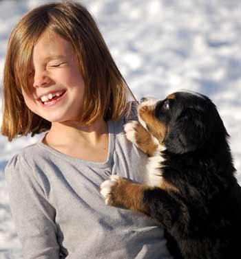 berner pup pulling hair