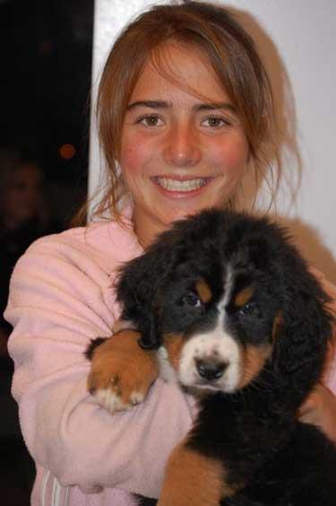 8 weeks, berner puppy