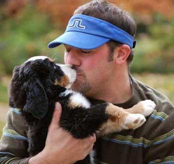 8 week old berner puppy kisses