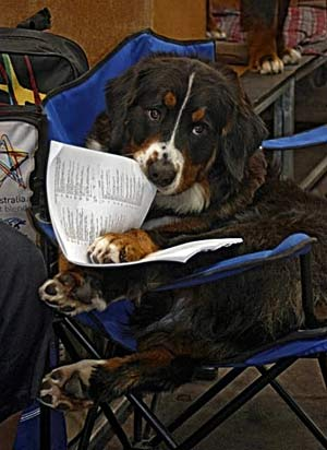 Bernese can read