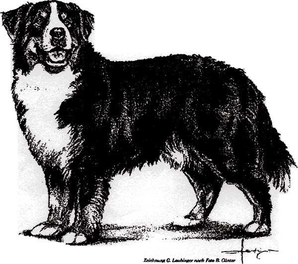 FCI breed standard picture