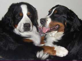 2 Berners in harmony