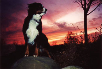 Bernese sunset