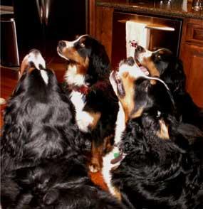 4 Berners