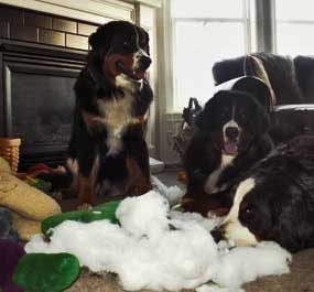 Berner pillow play