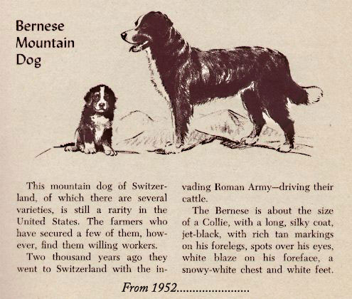 1952 Bernese in magazine