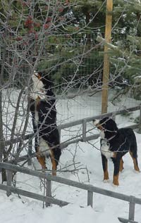 outdoor Berners