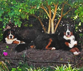 Berners in a hole